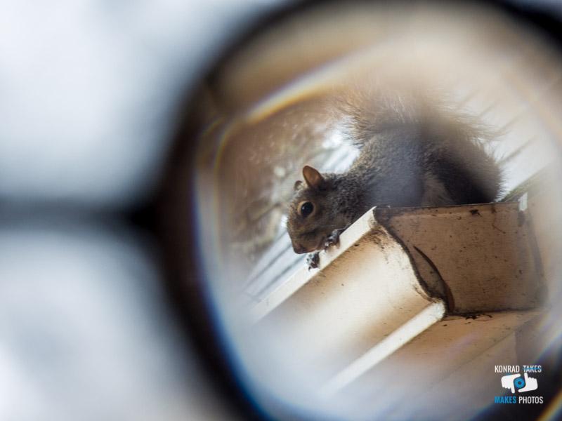 squirrel_gutter.jpg