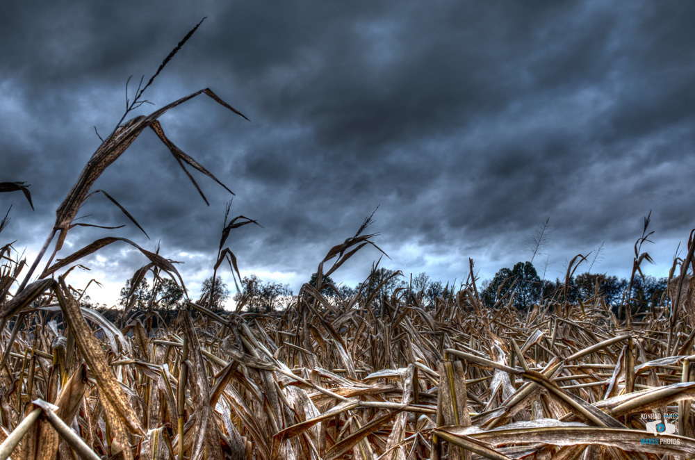 Lost in a corn field minutes before thunderstorm