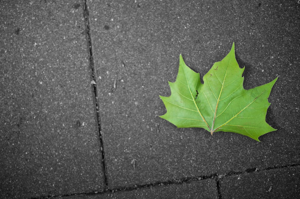 leaf_copyrighted