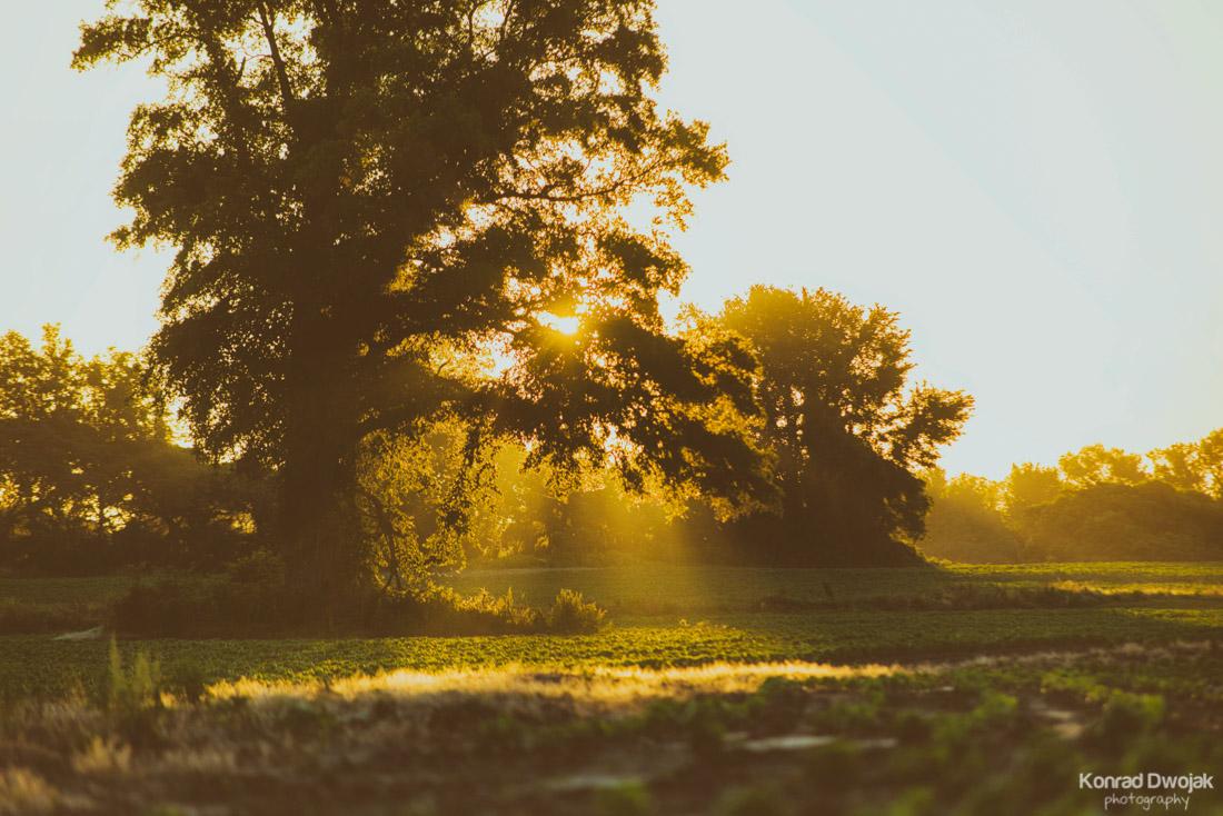 Morning Glory Sunrise