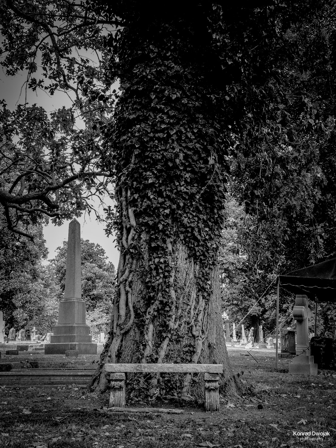 Have a peaceful rest - Elmwood Cemetery
