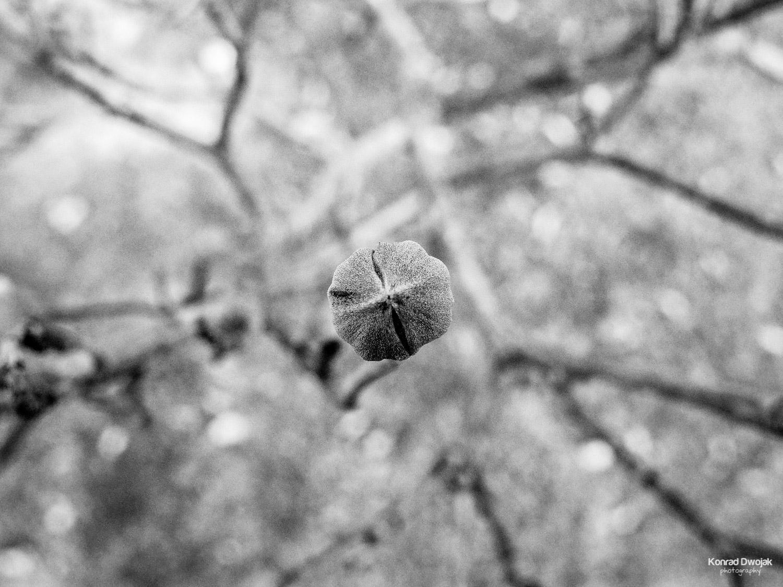 Hibernation - Elmwood Cemetery