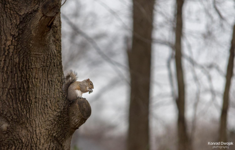 A squirrel enjoying her lunch