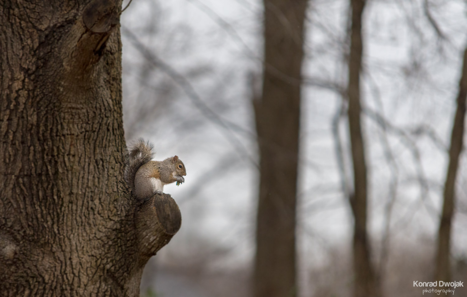 A squirrel enjoying her lunch
