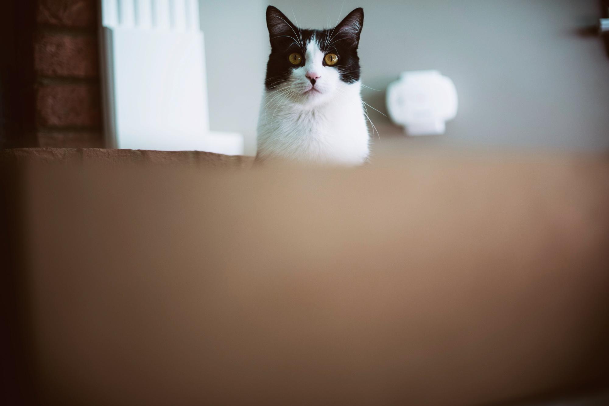 Salem hiding behind a box