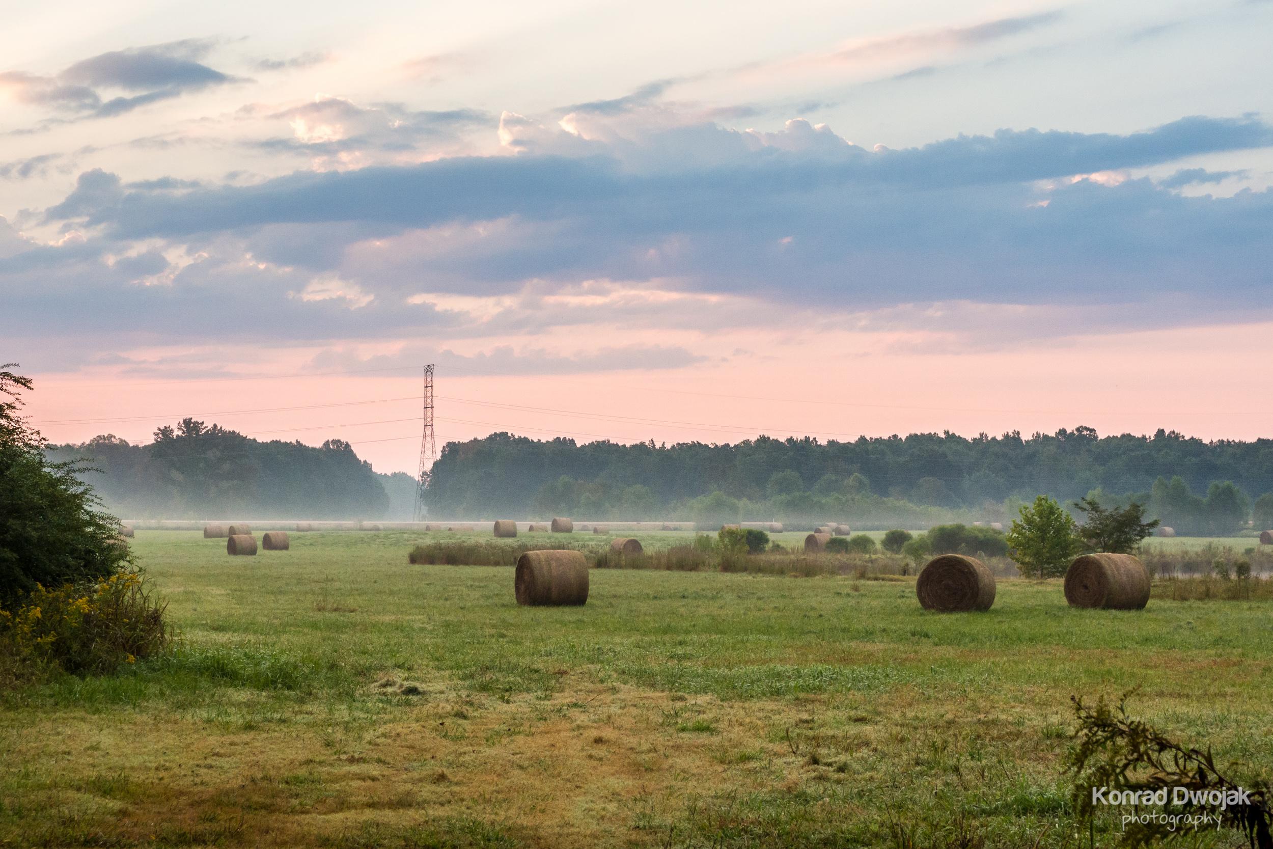 Morning jogging view