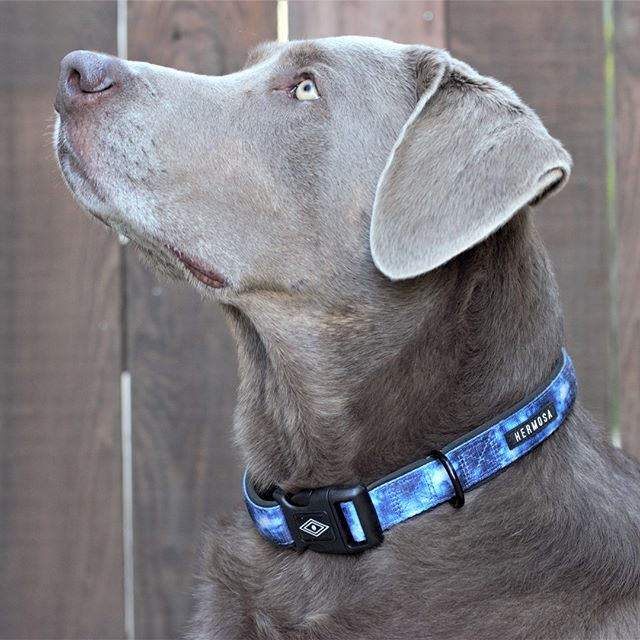 So here is my new little business and passion project, Hermosa Collars. We craft premium, comfortable collars and leashes with unique  designs. Our LLC was excepted to be a part of 1% for the planet and we are also giving back 5% of every purchase to our partners at The Ocean Conservancy, The Humane Society and The Wounded Warrior Project. (Each customer gets to pick which one to donate to at the end of checkout)  It's been an amazing journey getting to this point and our scheduled website launch is January 20th or sooner:) Take a look at our Instagram to learn more  @hermosacollars  #inspire #dream #giveback #doglife #artlife #comfort #function #waterresistant #rustproof #quickrelease #hermosacollars