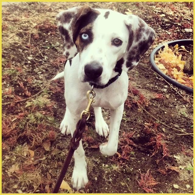Rosie the Hound Dog