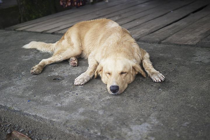 One of the many friendly dogs I came across. This one was napping while his owner sold sun dresses.  Uno de los muchos perros amistosos que me encontré. Éste estaba durmiendo mientras su dueña vendía vestidos de sol.