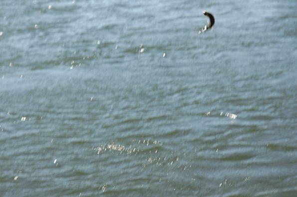 Screen Shot 2014-04-07 at 9.17.50 AM.png
