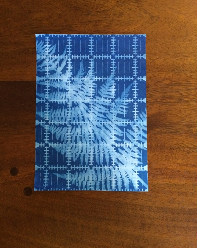 Hooray for Rain - Fern Ruler Cyanotype