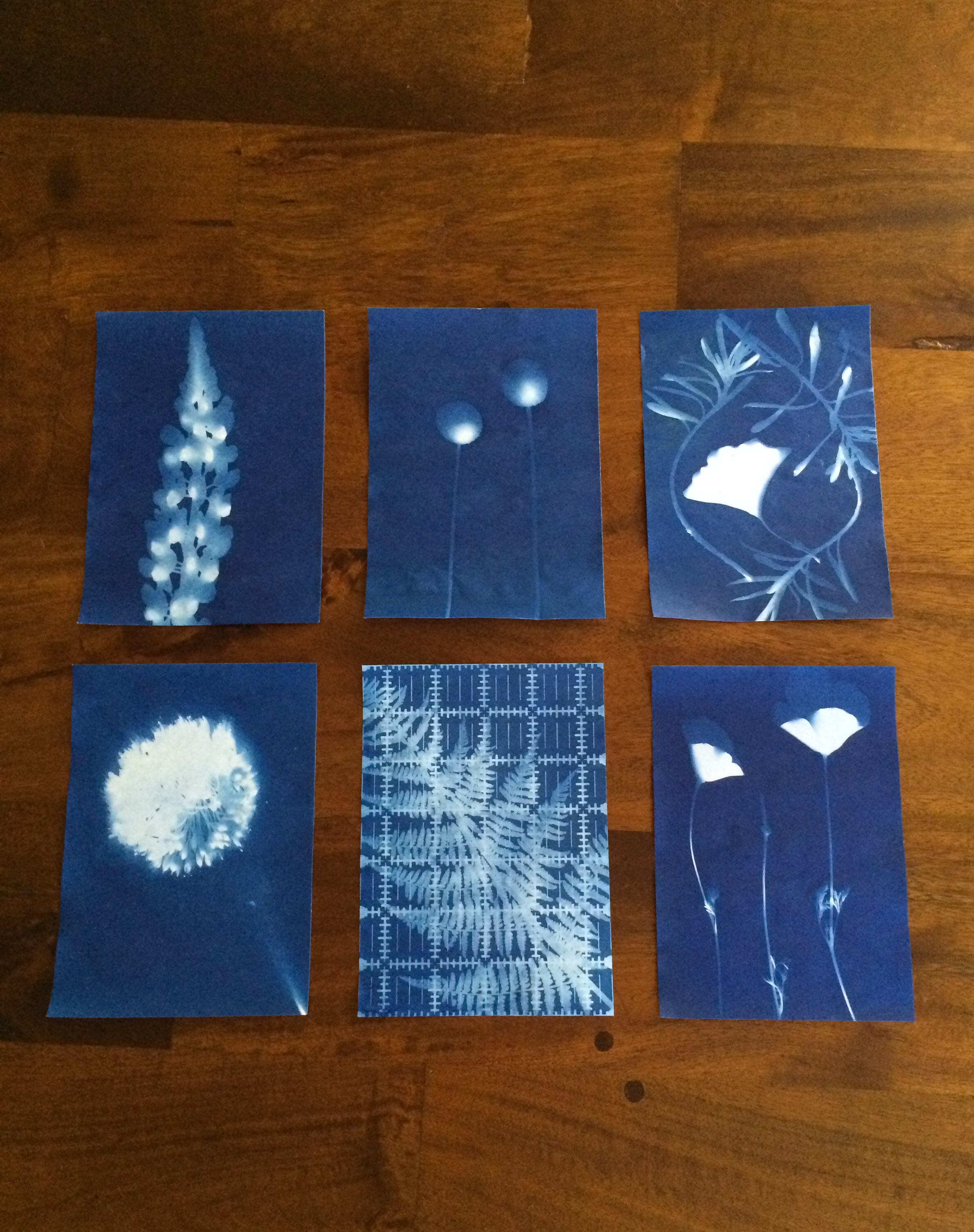 Hooray for Rain - Cyanotype Sun Prints