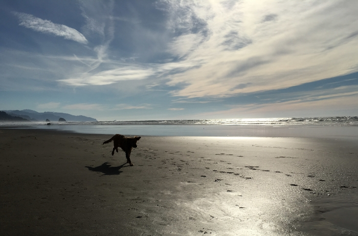 Dog Days of November - www.hoorayforrain.com