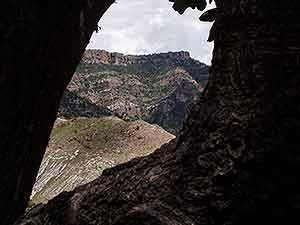 View of canyon rim from canyon bottom