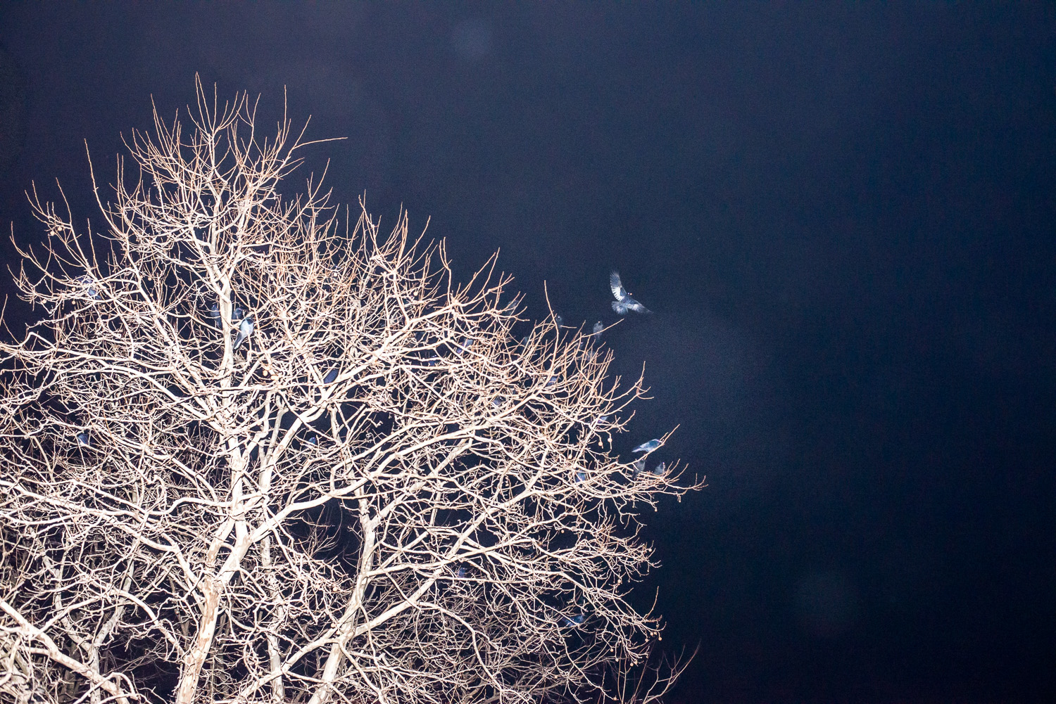 NIght Birds with White Tree.jpg