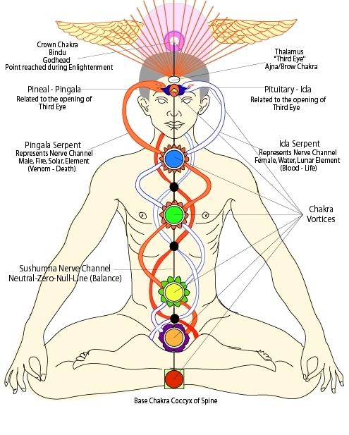 Demonstrating the subtle energy system; sushumna, ida and pingala nadis, kundalini and chakras.