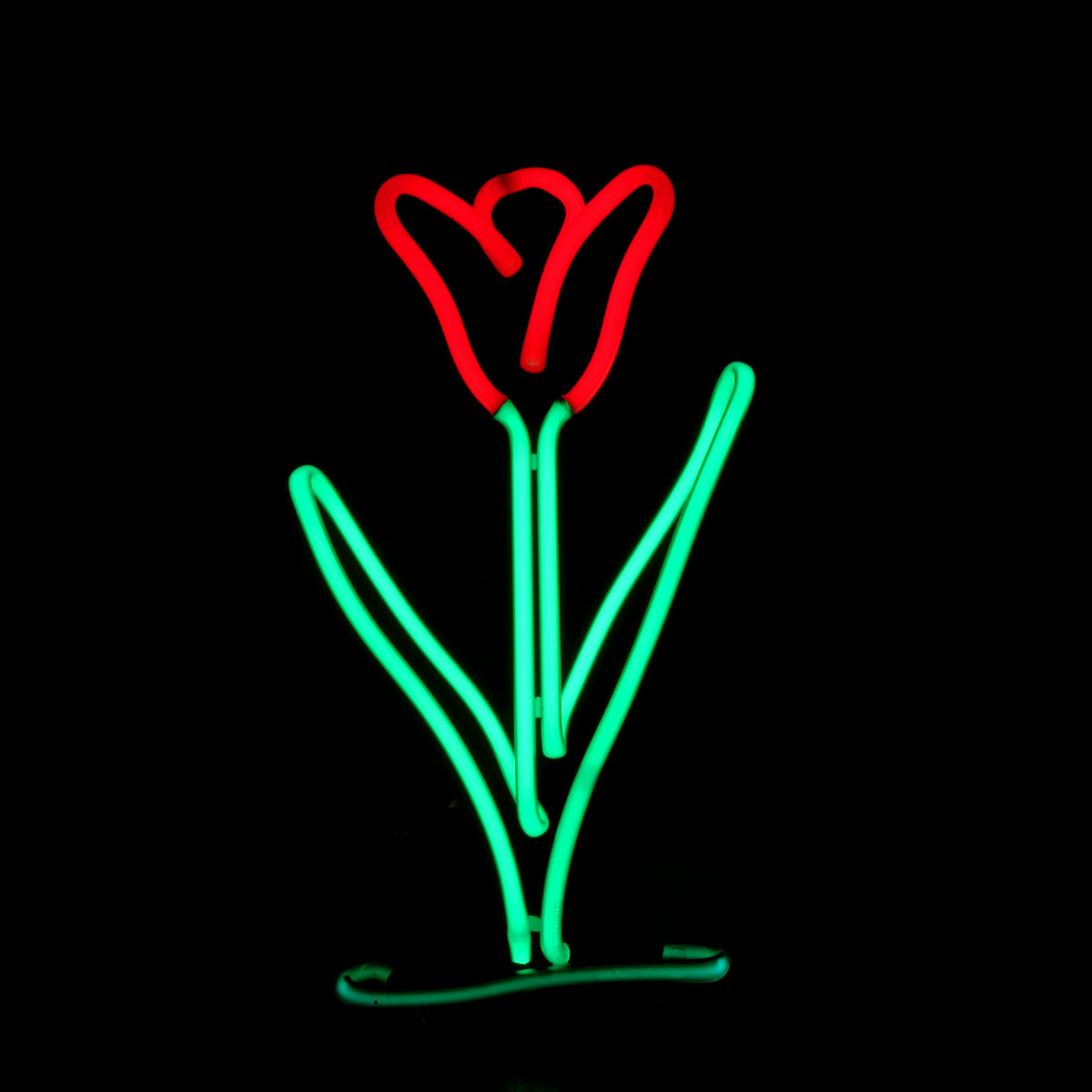 Designer Neon Floral Arrangements by Famous American Neon Light Sculptor