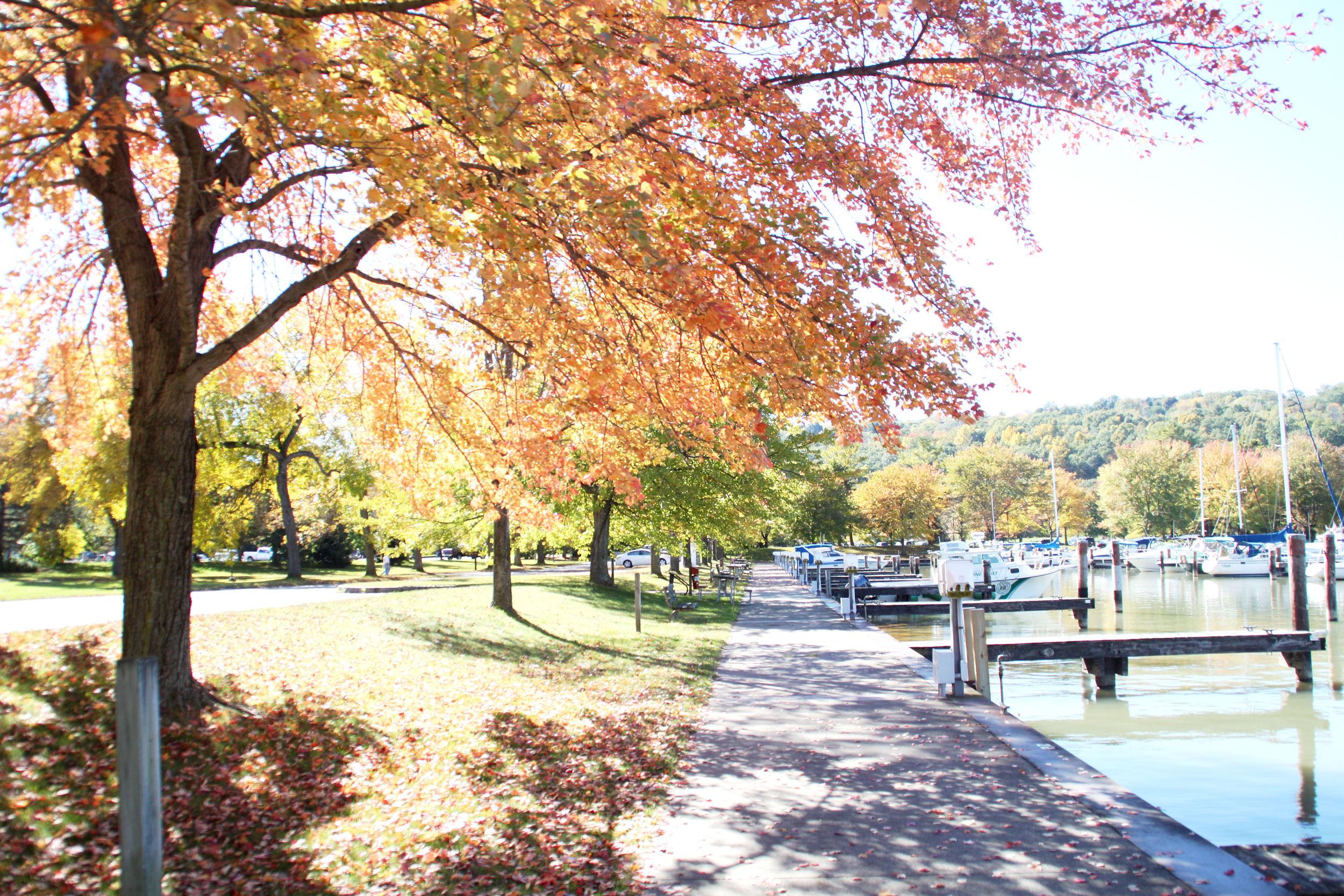Fall- Enchanting Elegance
