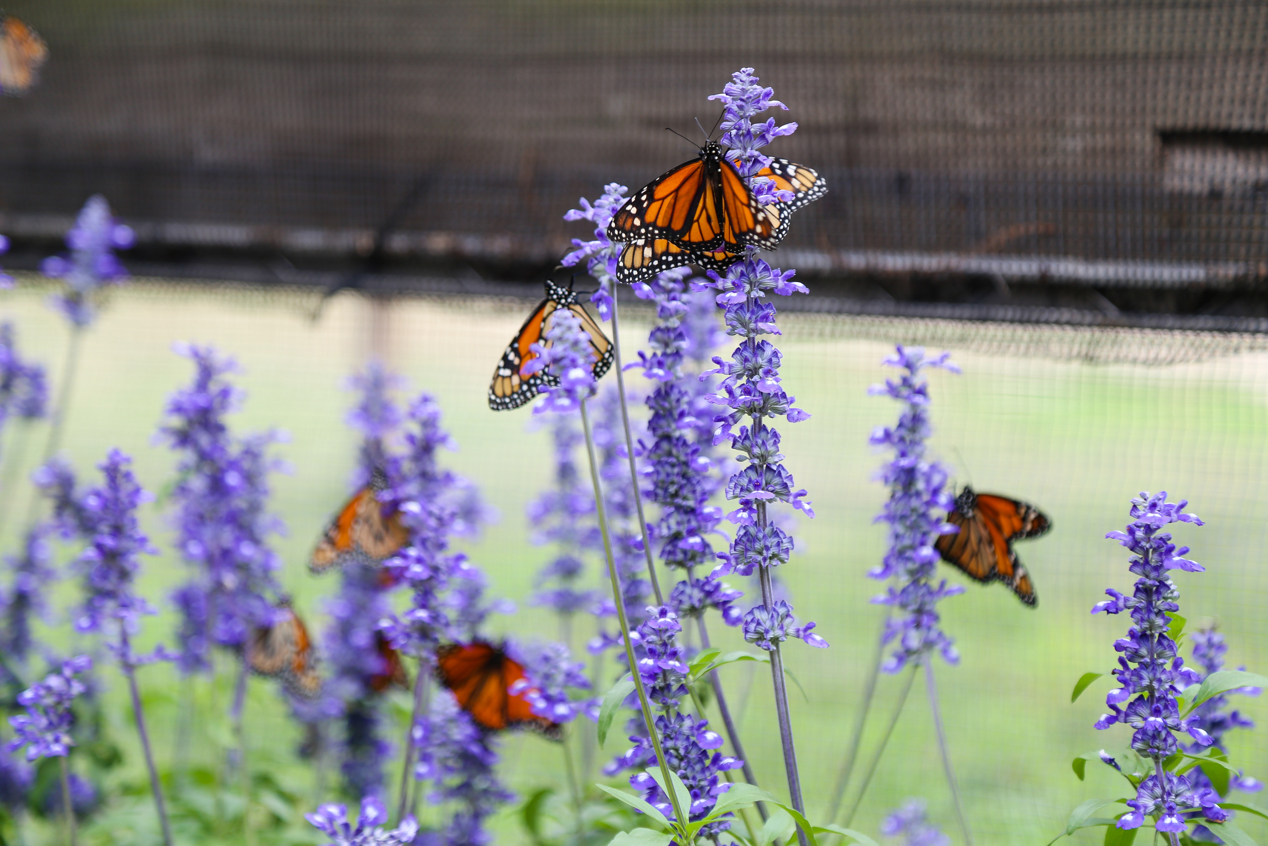 The Butterfly House- Enchanting Elegance