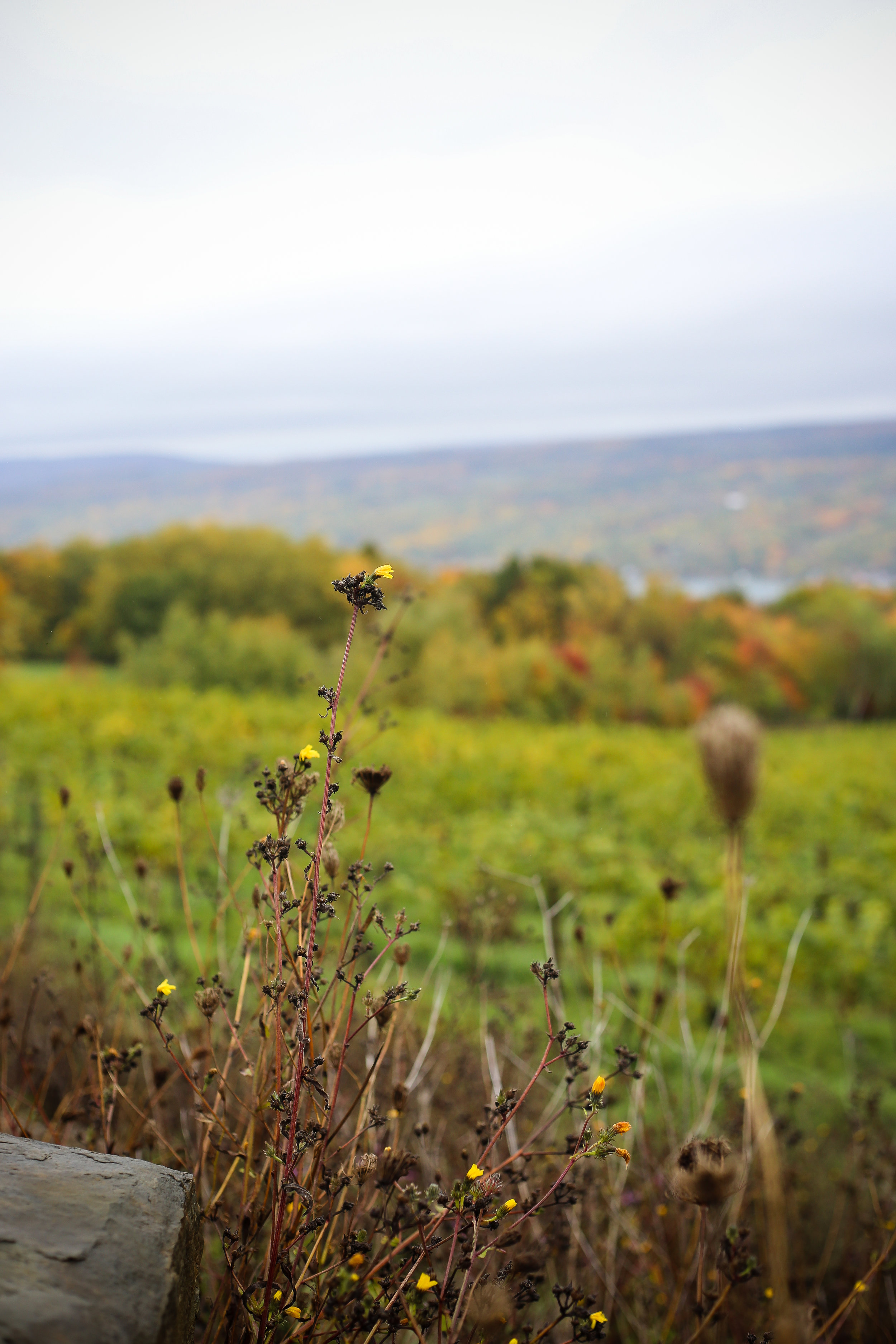 Fall Colors In The Finger Lakes- Enchanting Elegance
