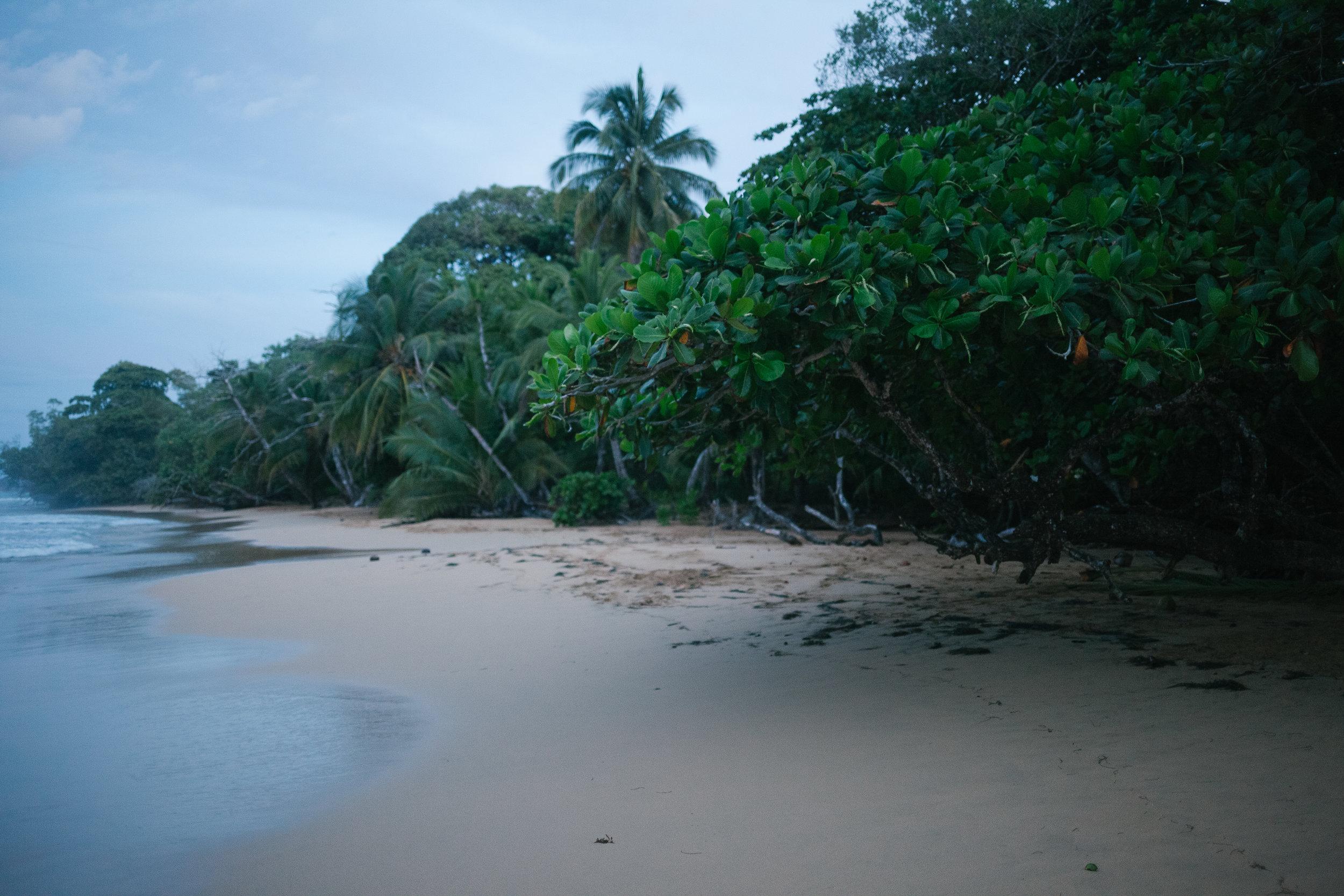 Bocas del Toro (5 of 34).jpg