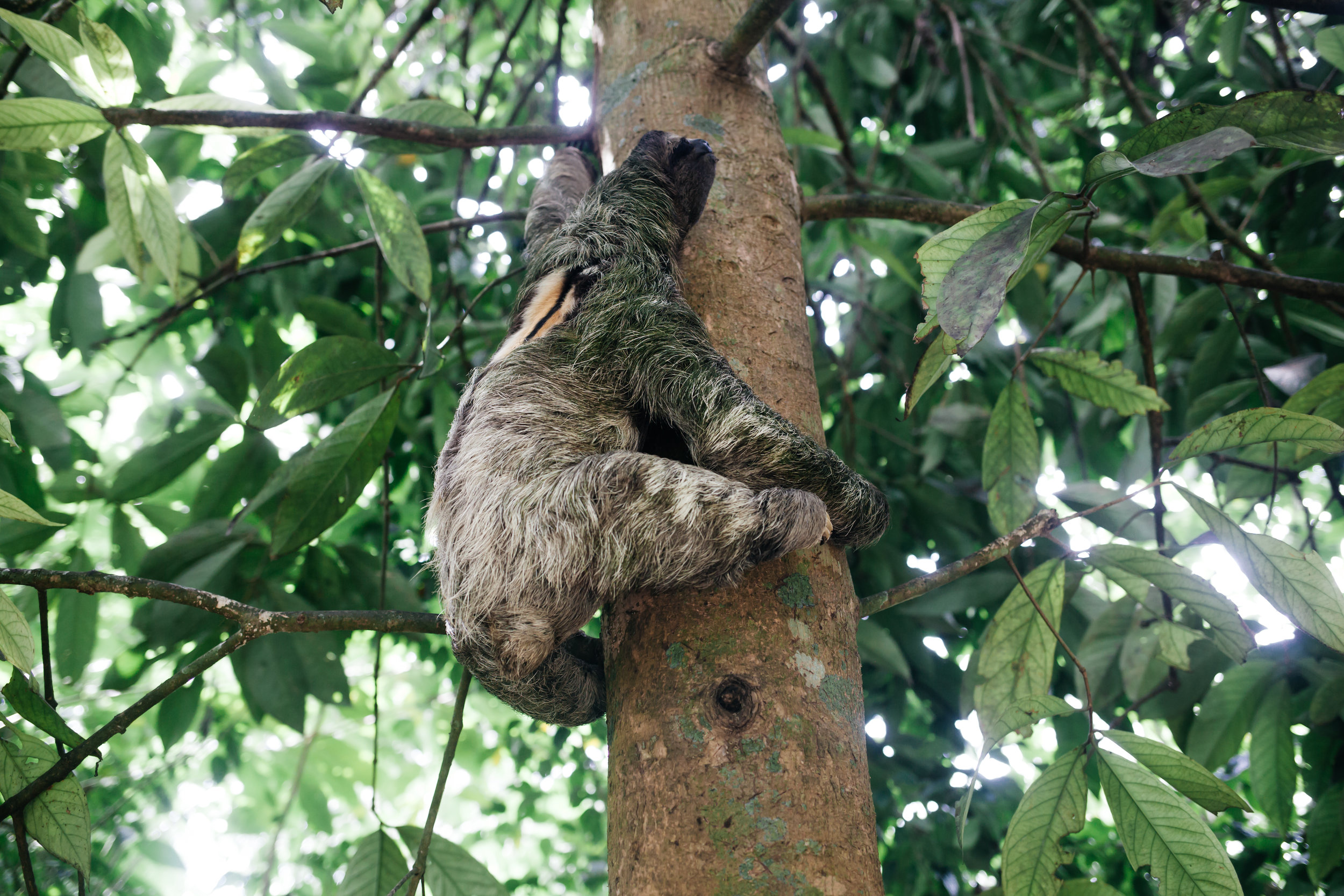 costarica_airbnb_sloth (22 of 49).jpg