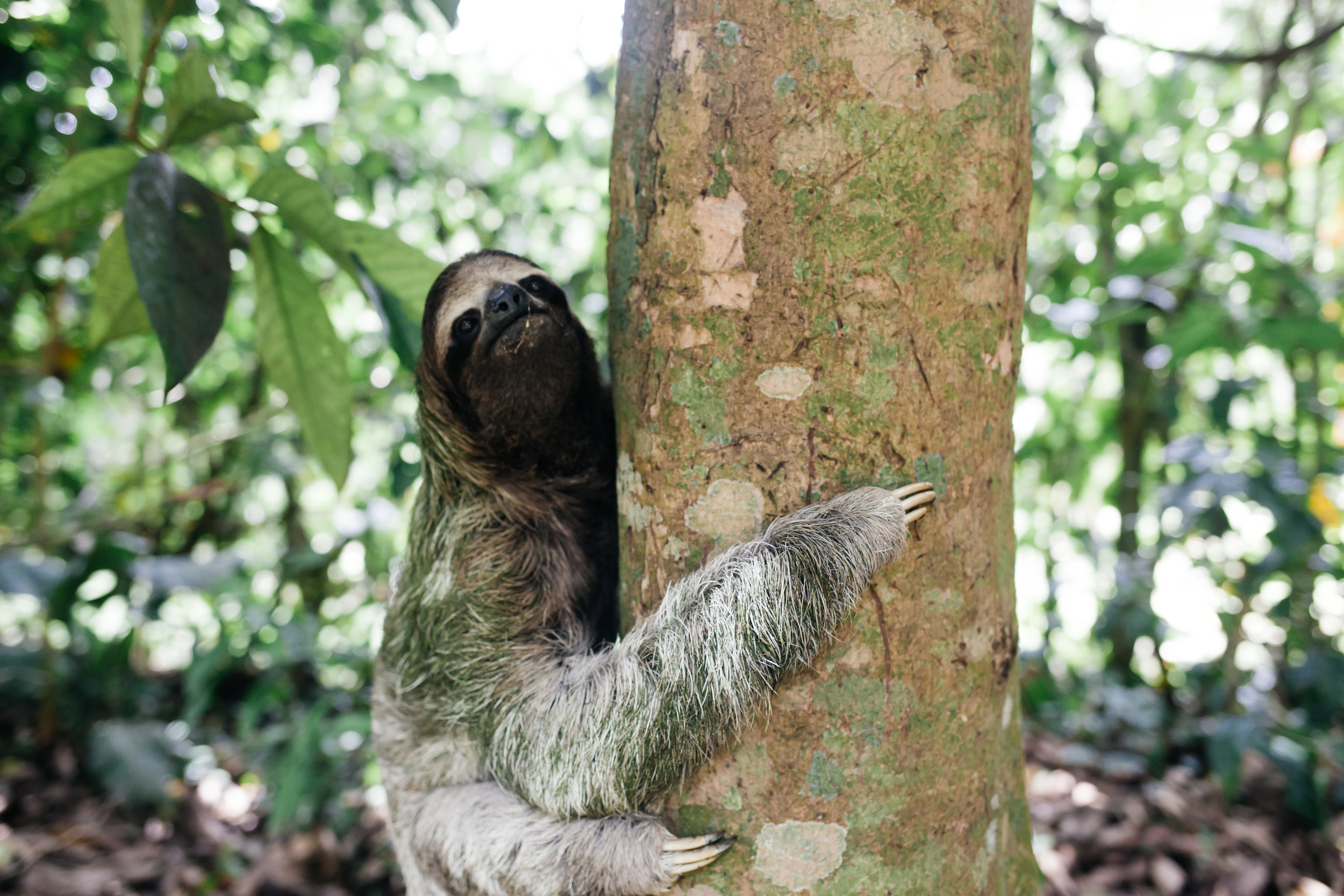 costarica_airbnb_sloth (25 of 49).jpg