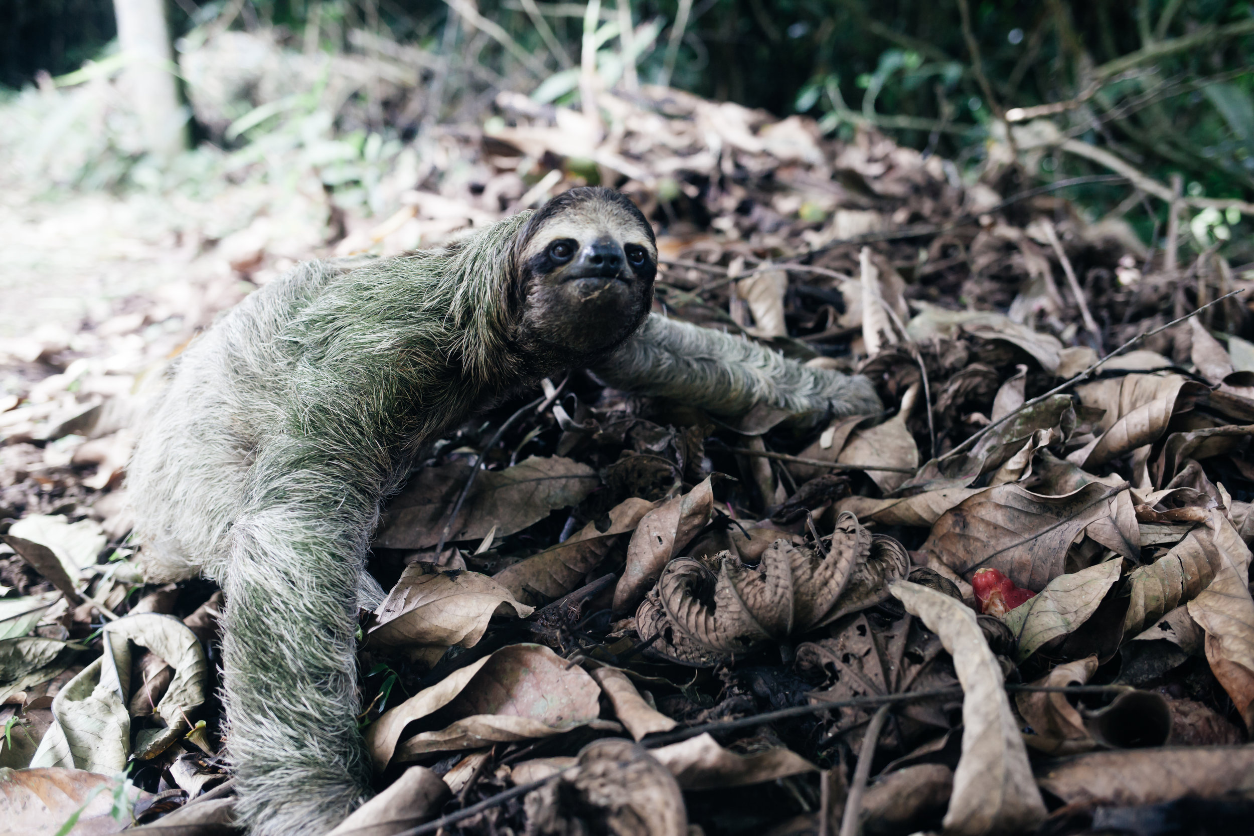 costarica_airbnb_sloth (33 of 49).jpg