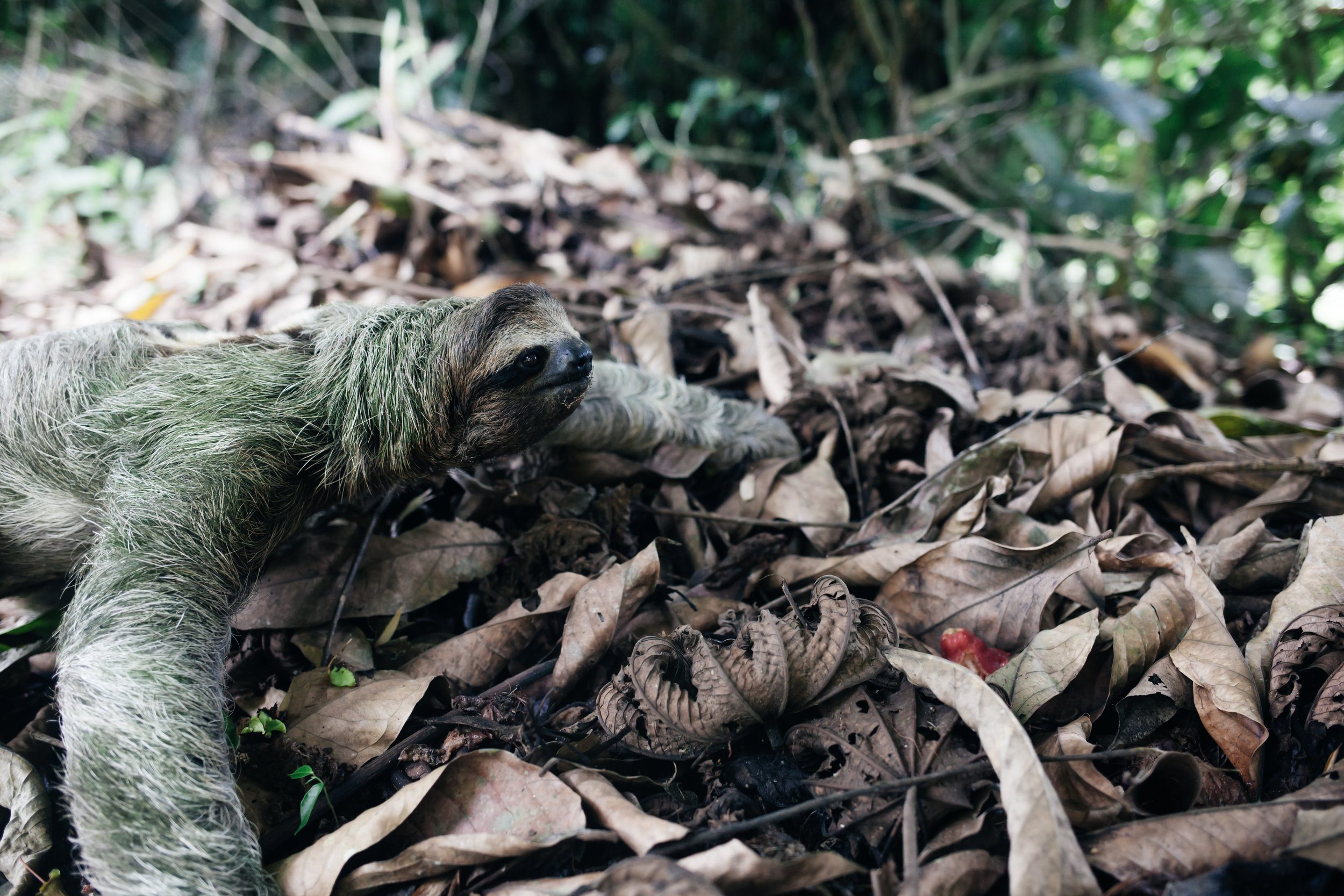 costarica_airbnb_sloth (34 of 49).jpg