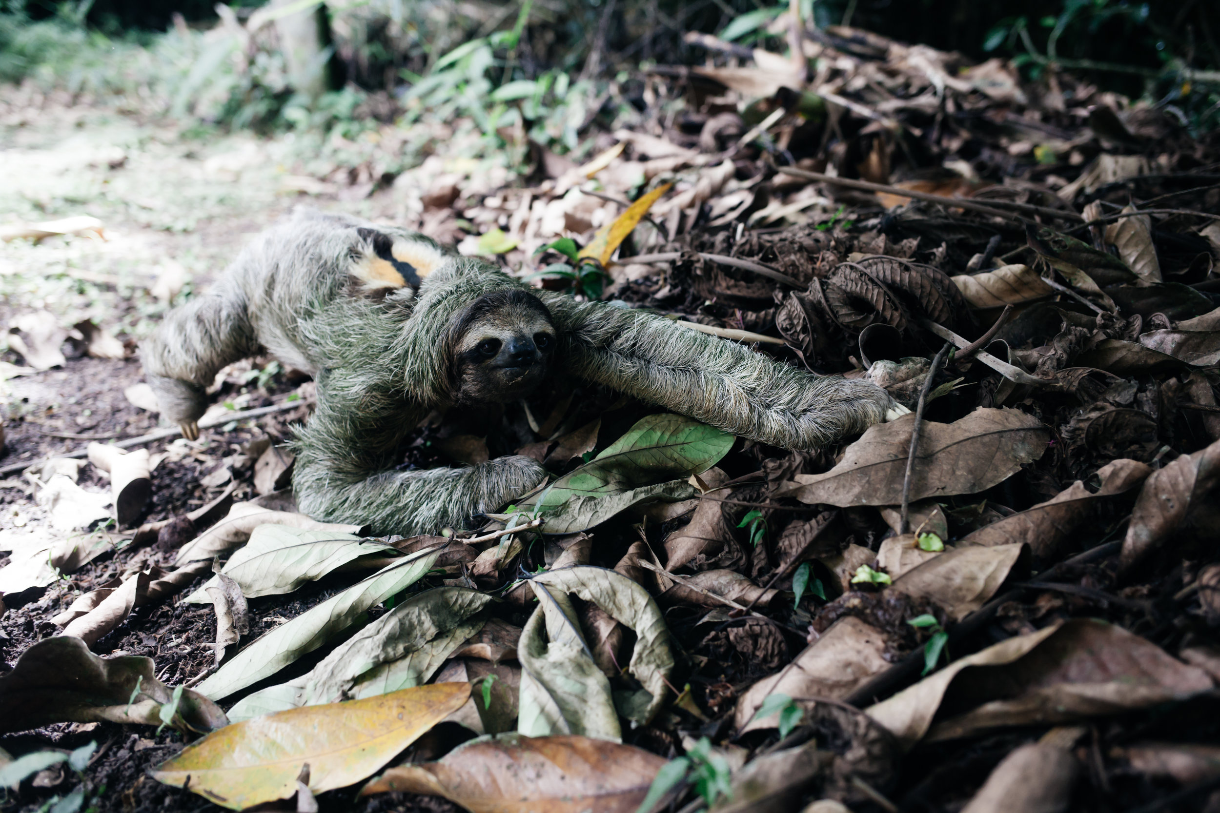 costarica_airbnb_sloth (36 of 49).jpg