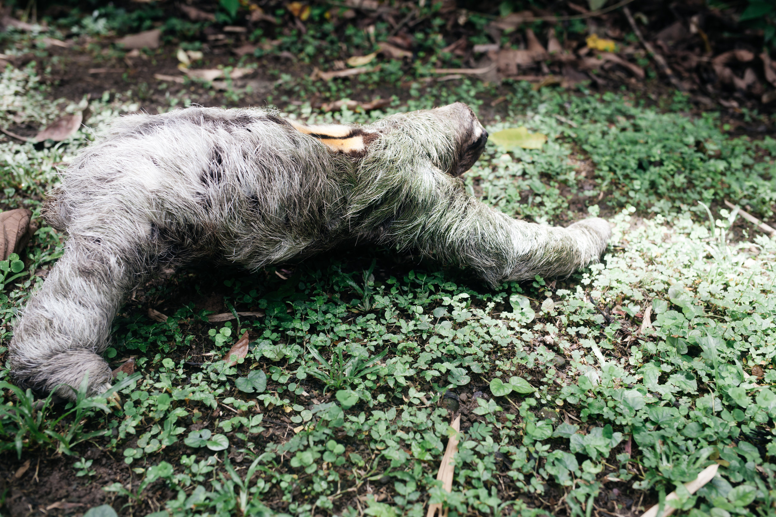 costarica_airbnb_sloth (40 of 49).jpg
