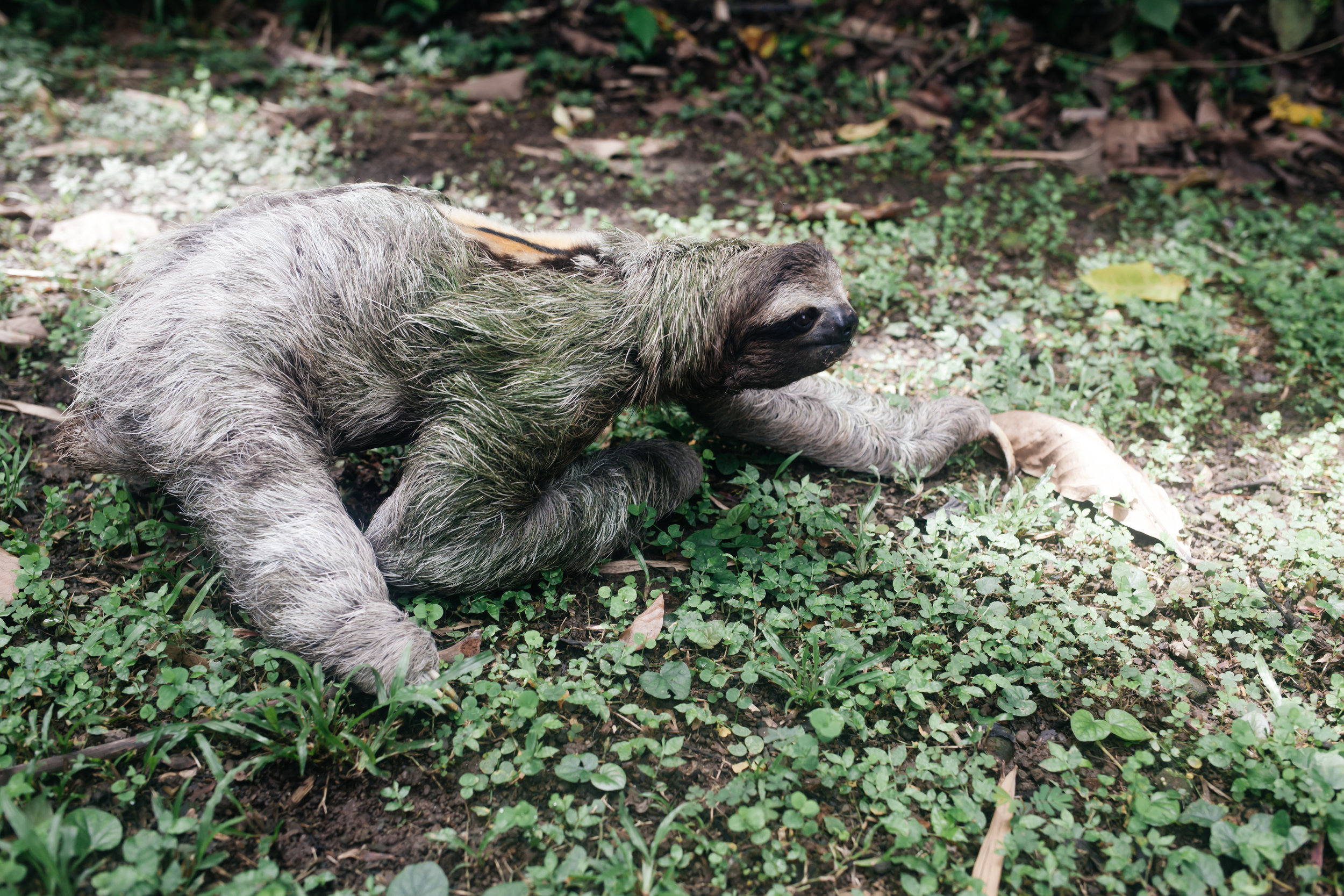 costarica_airbnb_sloth (41 of 49).jpg