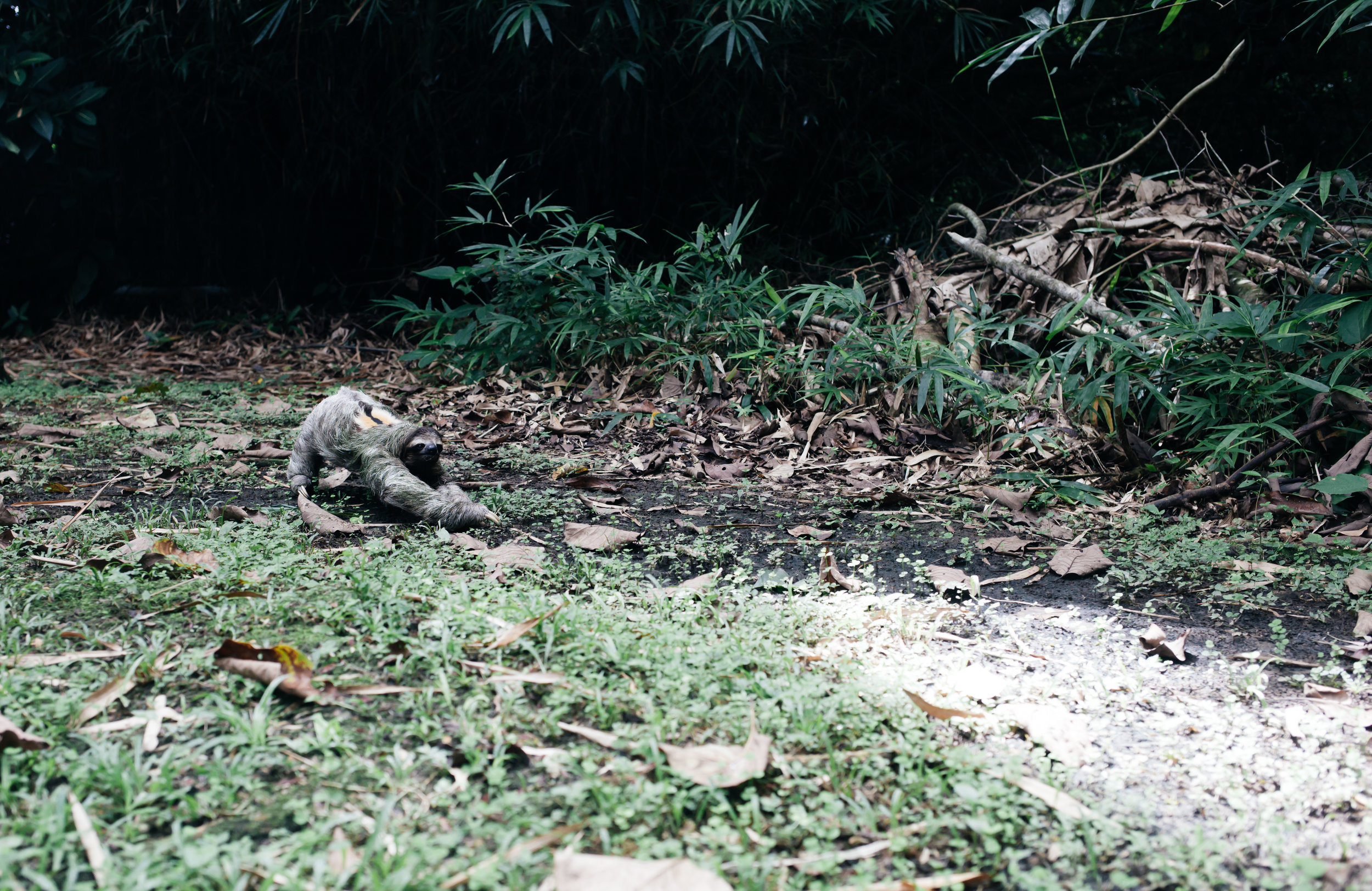costarica_airbnb_sloth (43 of 49).jpg