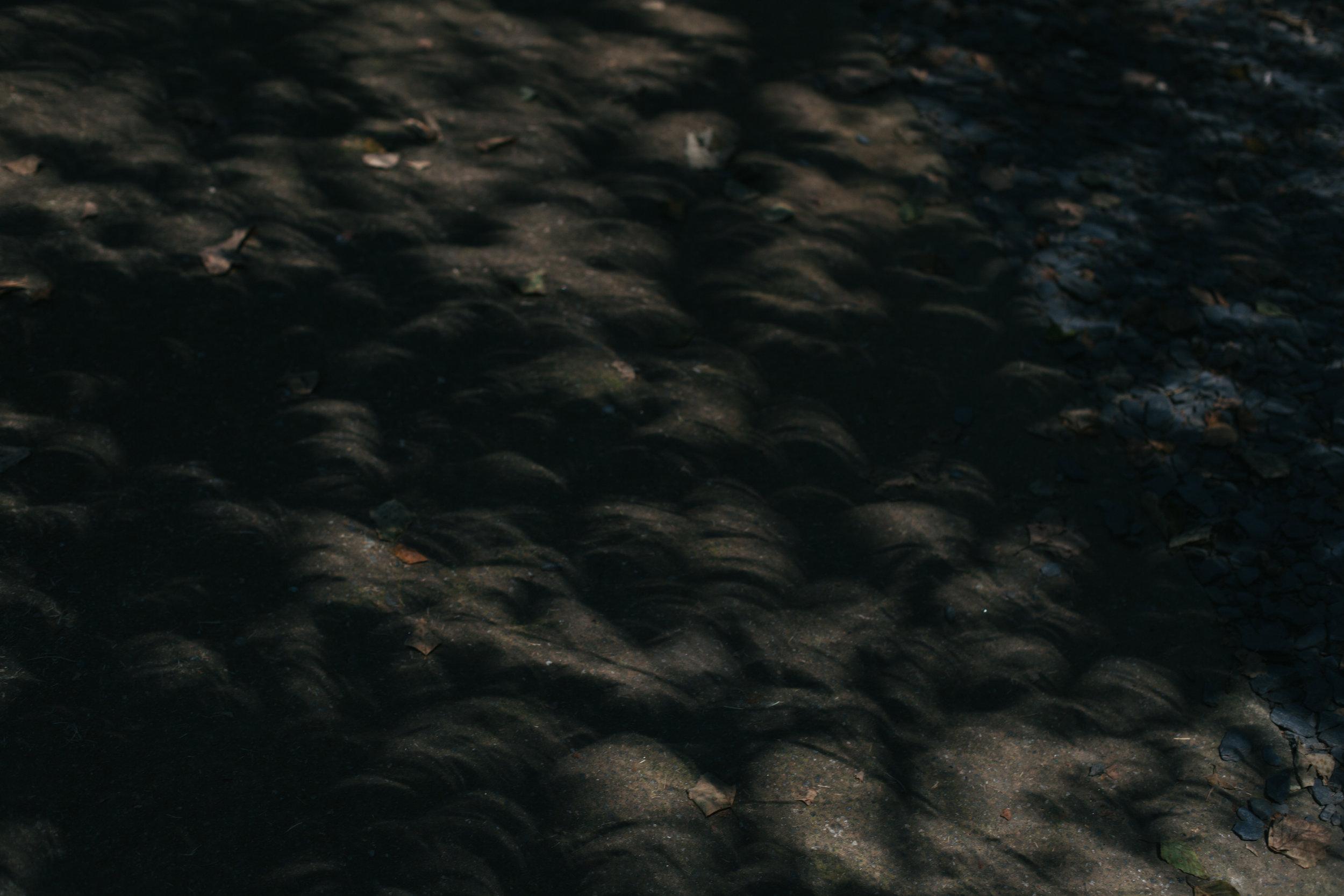 ft_white_eclipse (2 of 17).jpg