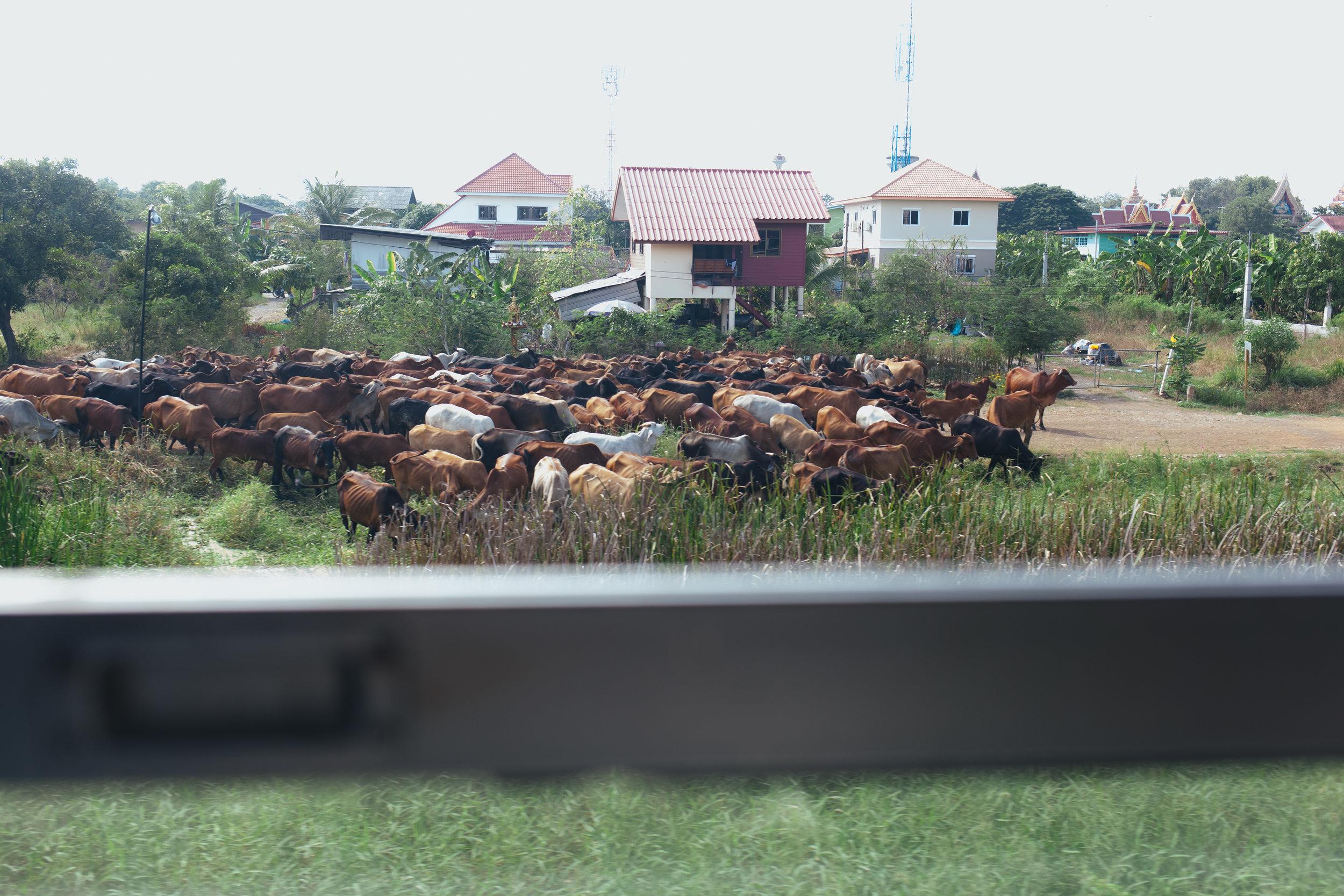 thailand_lampang_ayuthaya_train (48 of 77).jpg