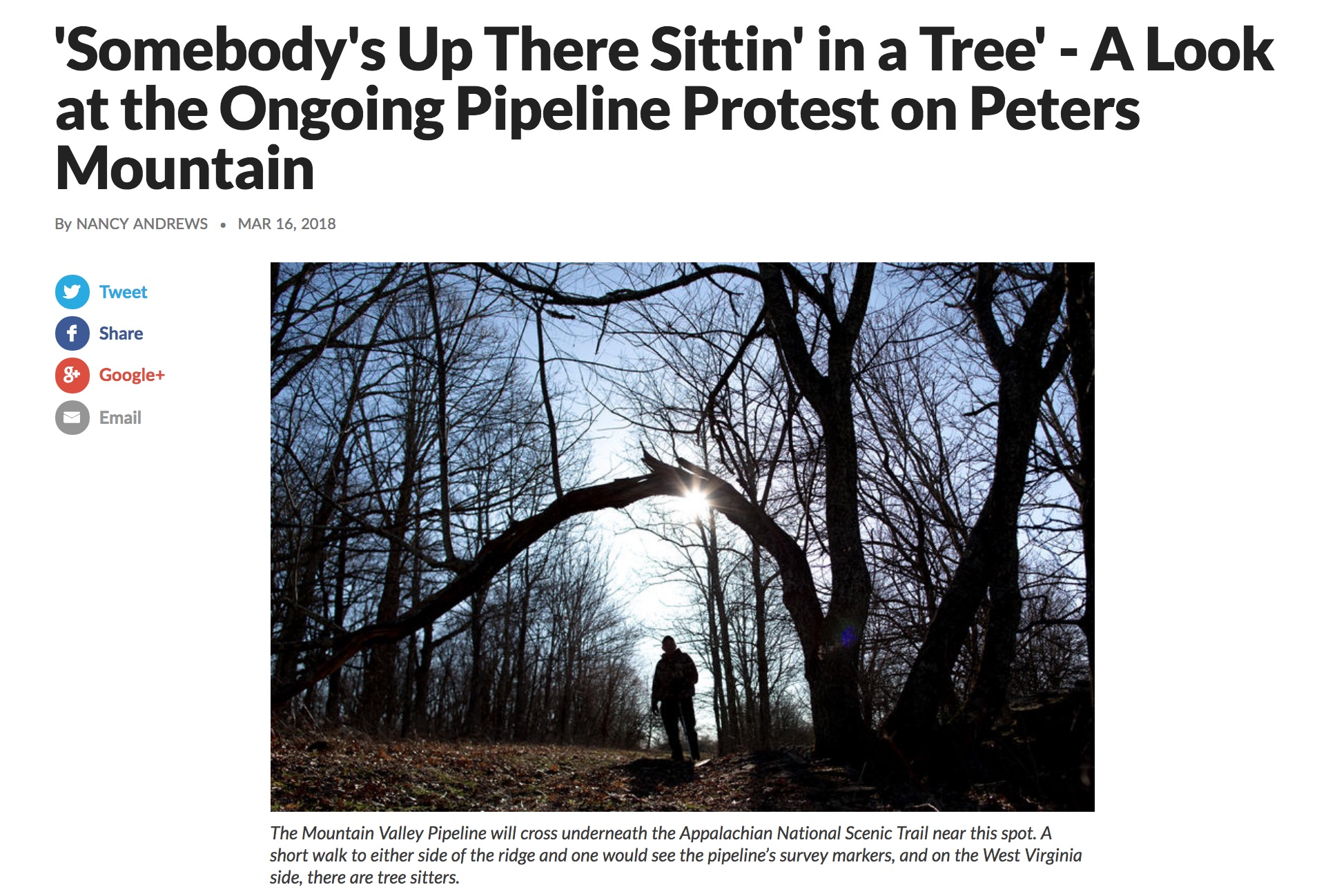 treesit-1.jpg