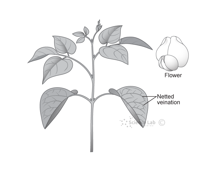 Plant figures