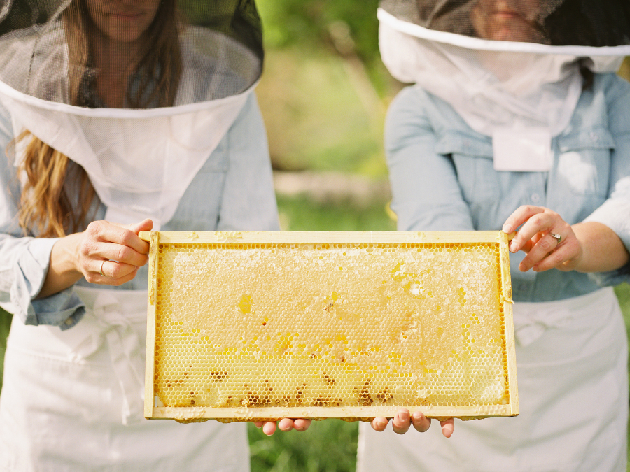 """""""The keeping of bees is like the direction of sunbeams."""" - Henry David Thoreau"""