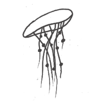 mossamoto's jellyfish drawing.png