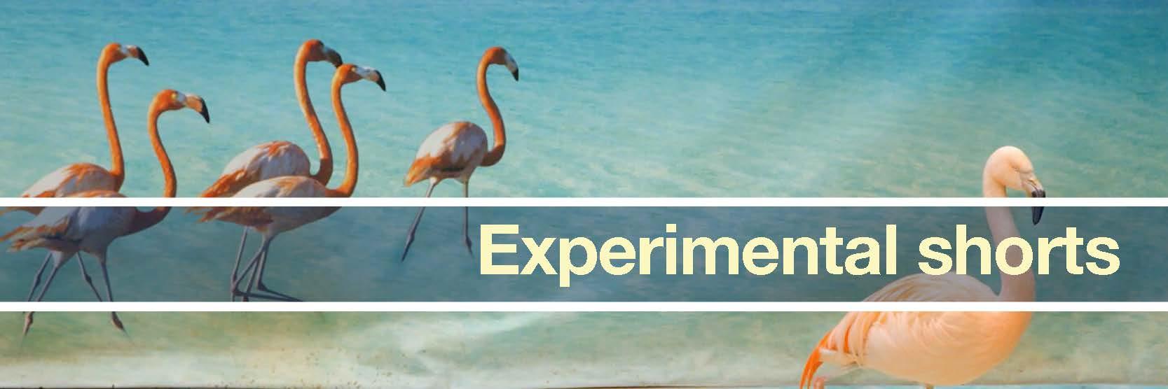 experimental shorts banner.jpg