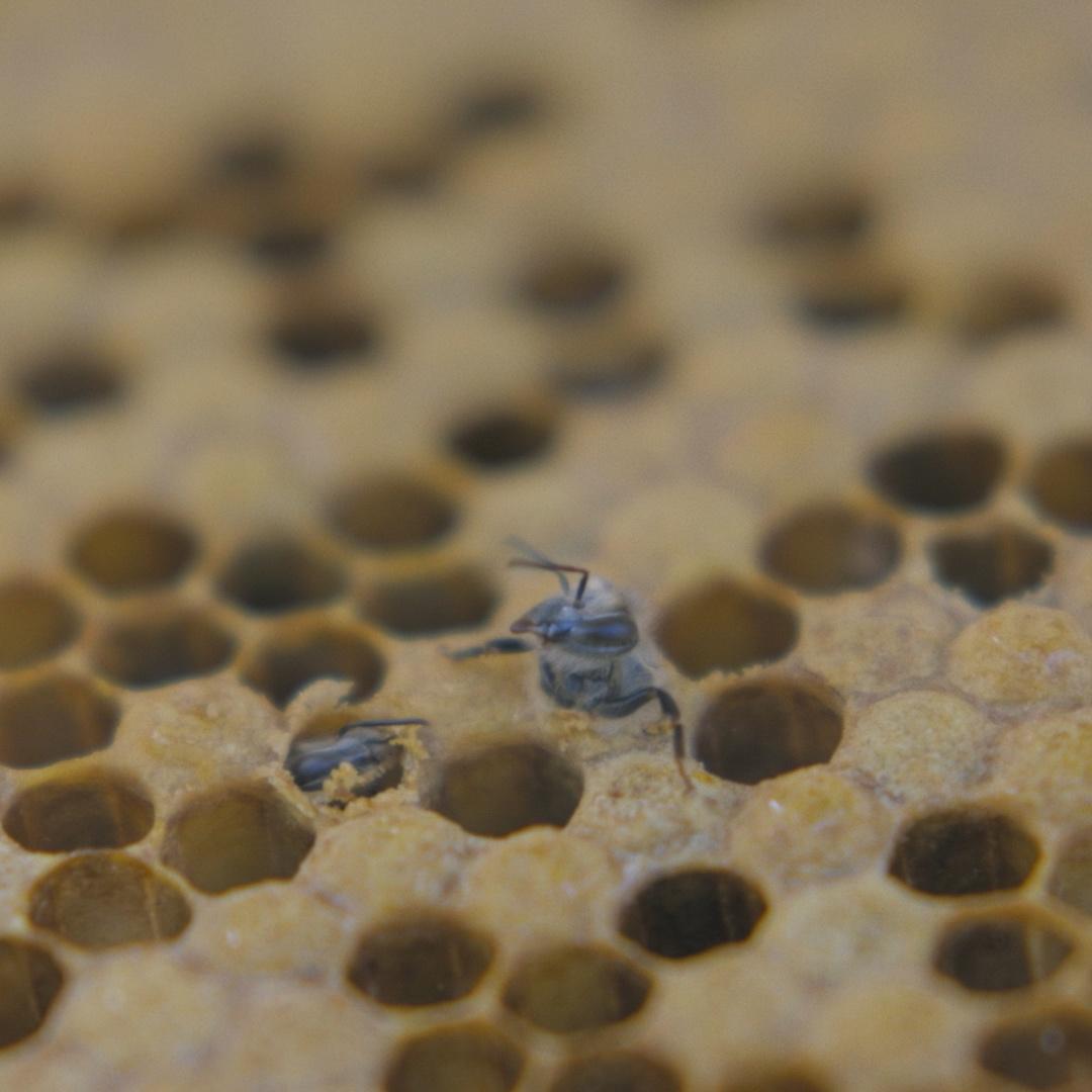 Bee-Being-Born.jpg