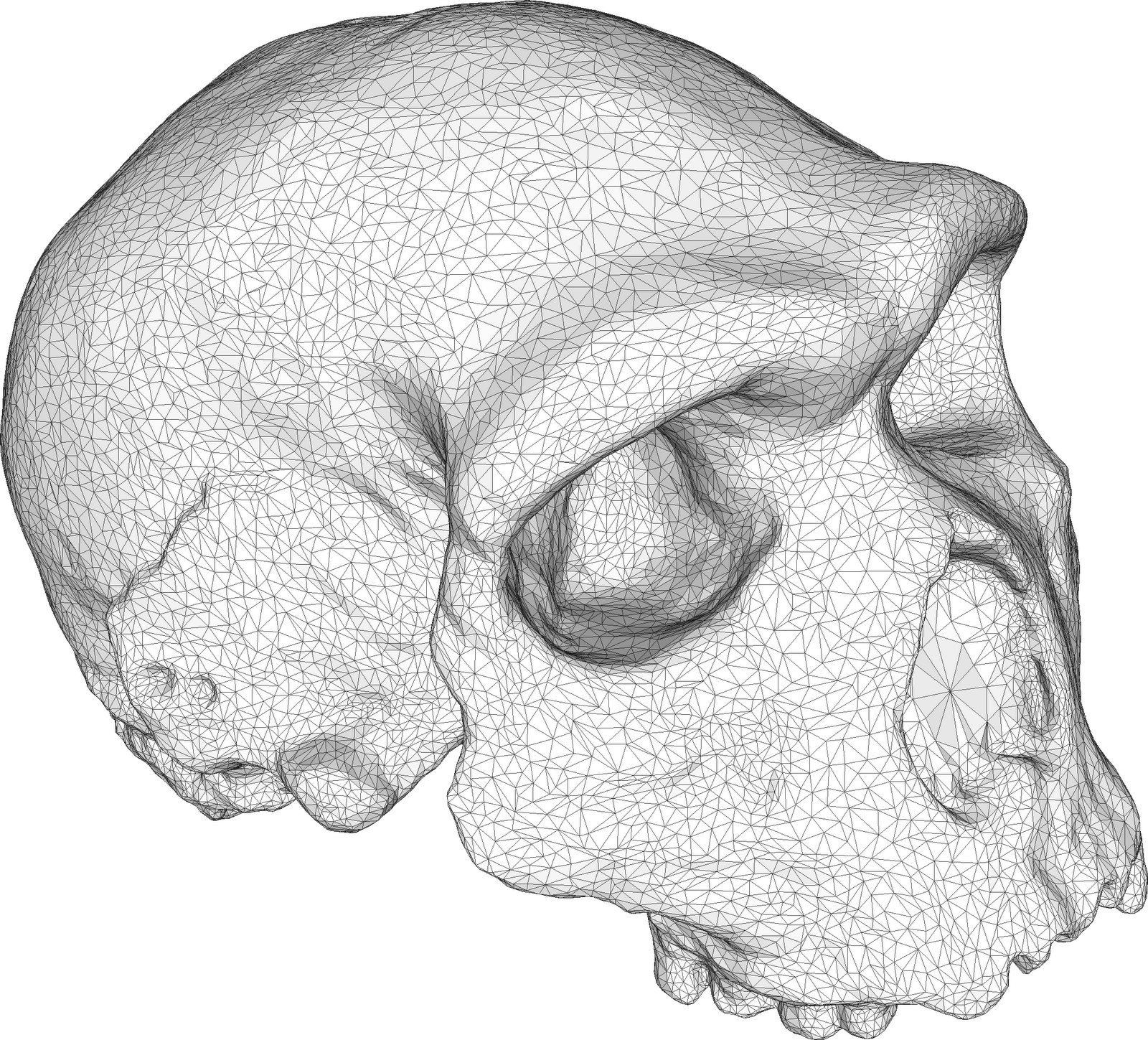topology triangles modelling skull