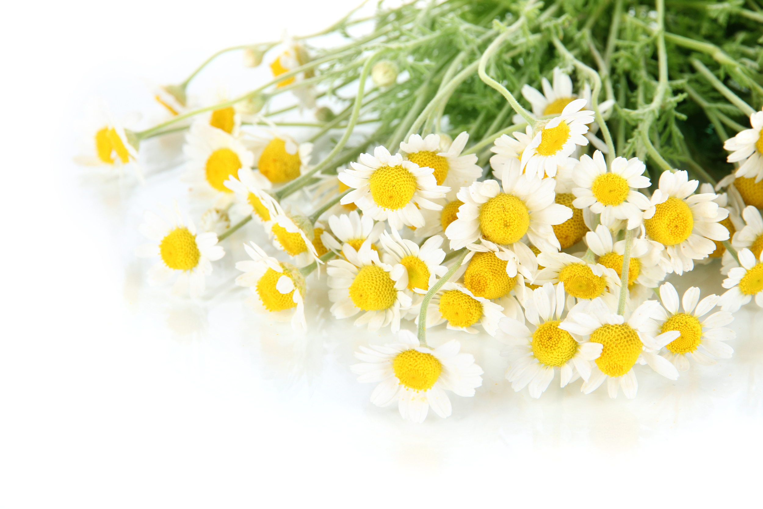 Global Beauty Secrets | Chamomile