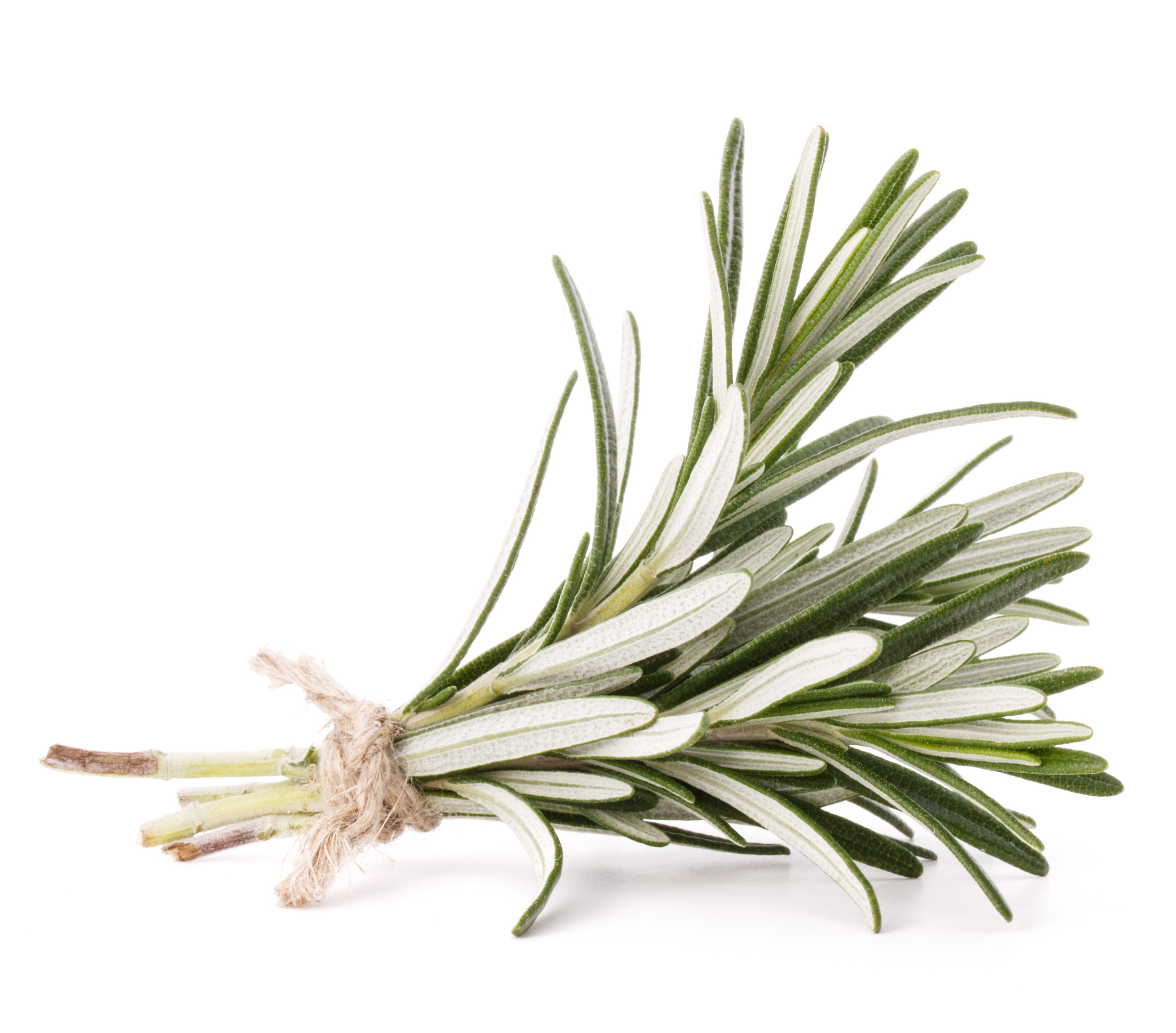 bigstock-rosemary-herb-spice-leaves-iso-62510585.jpg