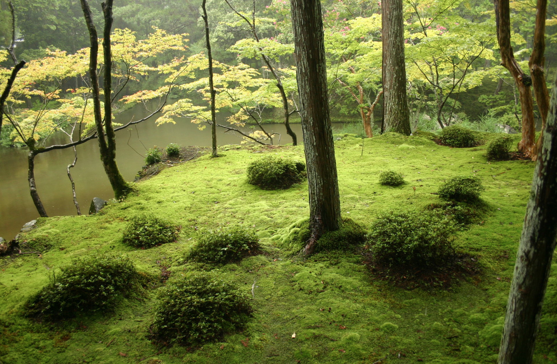 Saihō-ji  , or the Moss Garden, an early zen garden from the mid-14h century. The moss arrived much later, when the garden was not tended.
