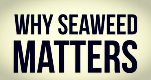 """There's a event/panel discussion tonight in Portland, ME titled """"Why Seaweed Matters"""". . In reviewing the poster, the event information and speakers, and the affiliated sponsoring parties, we're left with the feeling that the heading of the event must have left something out.  Titles that may have made more sense... """"Why Seaweed Matters for Big Business,"""" or perhaps """"Why Seaweed Matters To Iceland (see sponsor)"""". . Here we go (again). We are about to hear well-funded corporate entities disguising themselves as cottage industry folks tell us tall tales of the abundant opportunities the """"Blue Economy"""" has to offer.  Are we going to (again) hear that the local seaweed economy can create jobs? Only if you have at least $20,000 and access to the open ocean....and that's just the starting point.  Are we going to (again) hear that seaweed has massive """"potential"""" as a health food? Please. Do we need any more press about this?! Hasn't Gwyneth said enough?  Are we going to (again) hear the oft-repeated, never proven claim that wild harvest seaweed is sustainable? You know how we feel about that subject (if not, see prior posts). . So does seaweed matter? Of course! Even more than this marketing hype would lead you to believe. Let's hope the conversation touches on the truth.  #maineseaweed #seaweed #sustainabletruth #maine #portland #blueeconomy  #seaweedmatters #oceanmatters #corporatecontrol #panelproblems  #bigbusiness #herewegoagain #mindyourownbusiness #iceland #truthmatters #seaweedfest #dontbegooped #clusterf*ck"""