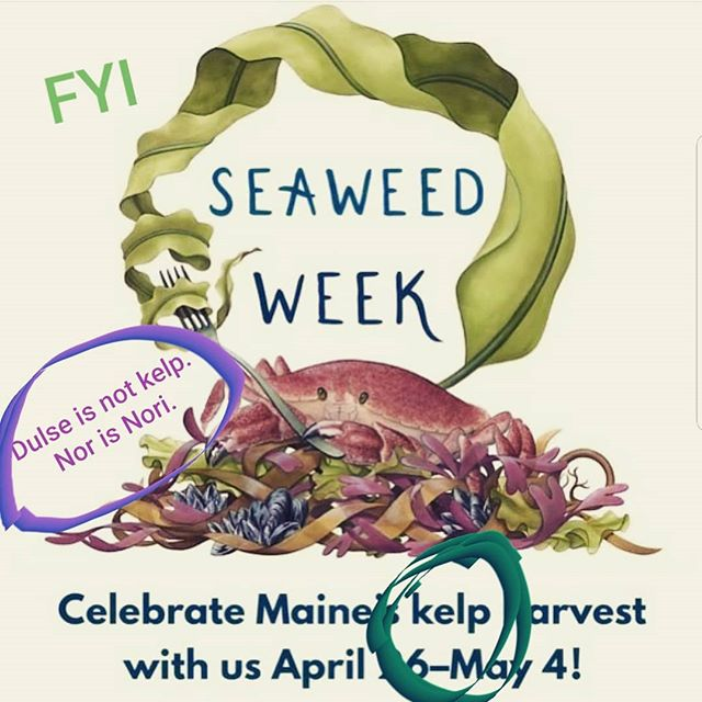 "RESTAURANTS, YOU ARE RESPONSIBLE!  Please provide clarity for the consumers of the #seaweedweek hype. Simply answer these critical questions so that your loyal customers can be served truth & transparency with their meals: Who is supplying your seaweed? Is it aquacultured (farmed) or from the wild?  And don't forget: if you've been gifted or purchased local seaweed that's been ""sustainably harvested"" or ""hand harvested"" or whatever feel-good marketing you've been sold, remember that this is a completely unregulated and unmonitored industry that capitalizes on free resources from the ocean with ZERO understanding of how that is impacting our current #environmentalcrisis. Read more about Maine's sourcing problems here: bit.ly/seaweedsourcing (link in bio). . @seaweed.week @heritage.seaweed @choco_latte.cafe @havanamaine @peekytoeprovisions @marshallwharfbrewing @roverbagel @explorefrontier @taoyuanrestaurant @40paperrestaurant @long_grain_camden @fogtownbrewing @theliberalcup @anneke_jans @baxterbrewing @fluxrestaurant @baobaodumplinghouse @dineatboones @chavalmaine @crunchypoke @dobrateame @eventideoysterco @fivefifty_five @flatbreadportland @288forestreet @hardshoredistilling @thehoneypaw @hugosmaine @inkwelllounge @lbkitchenportlandme @liorestaurantmaine @local_188 @mainecraftdistilling @maineoystercompany @mamiportland @mr.tuna_maine @novareresbiercafe @ottoportland @parloricecreamco @piccolomaine @rootwildkombucha @_rose_foods_ @scalesrestaurantportland @surlieportland @portlandoystershop @thirstyportland @twofatcatsbakery @unionportland @venasfizz @woodford_fb @cafemirandamaine @mainstreetmarkets @northbeaconoyster @sammysdeluxe @ninajunerestaurant @barreledsouls @onefiftyate @foulmouthedbeer @thehichborn @taoyuanrestaurant @gathermaine @evanhennessey @blacktrumpetnh @moxynh @ohanatakeout"