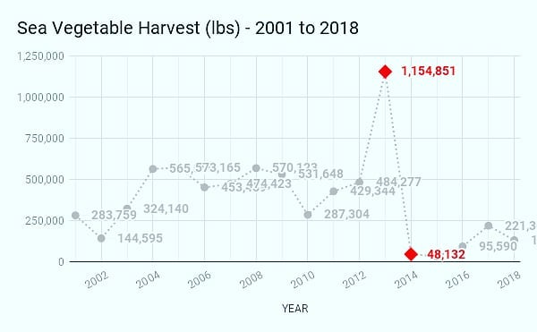 "Why were so few sea vegetables harvested in 2014?  The Maine Department of Marine Resources (DMR) provides seaweed harvesting (landing) data. They catalog total landings and dollar value (Link in bio). What they don't do is break out sea vegetables from rockweed. And they show the data in a table, which is harder to read than a graph. So we decided to graph the sea vegetable data for you.  So what happened in 2014?  We don't spend every day on the water, but we've spoken to plenty of fishermen who've made offhand comments like ""I'm just not seeing seaweed where I used to."" That's real, but not scientific.  We've spoken to DMR, but they don't give any explanation. Nor will they provide landing data for any individuals. That's private information. In fact, you can only access landing data if 3 or more harvesters use a given port, and harvesters only have to report in the first place if they harvest more than 10 tons in a year.  When you look at the data, 2013 and 2014 really jump out. Prior to 2013 you see relative stability. Then there's a huge jump in 2013 (roughly doubling the prior years). Then almost nothing in 2014 (about 10% of prior years, excluding 2013). . Given the growth of companies who use Maine's wild seaweed—both locally and nationally—this all appears really strange. But without access to the data, and without oversight to insure accurate reporting, and without complete reporting requirements, we can't get to the center of the tootsie pop. Citizens shouldn't have to feel their way through this degree of fog when it comes to understanding what's happening in our oceans.  #maineseaweed #incompletedata #cantmanagewhatyoucantmeasure #sustainableseaweed #mainecoast #seaweedfest  #dmr"