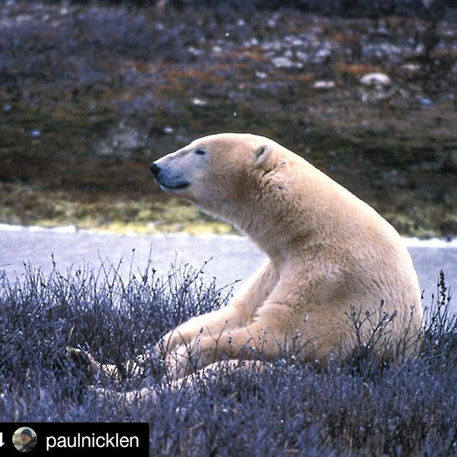 You took the words right out of our hearts @paulnicklen! Thank you so much for this. Sending love out to all who are fighting for our future.💞💚💙🌏. .  #Repost @paulnicklen (@get_repost) ・・・ Do you ever feel blue?  Do ever feel low on energy? Do you ever feel depressed about the state of our planet? Do you ever feel overwhelmed about climate change and the lack response to the biggest crisis to ever face humanity?  Do you ever feel angry about the constant mismanagement of all living resources?  Do you ever feel frustrated that industry almost always prevails over sustainability? If you have answered yes to one or all of these things then please know that you are not alone.  So many of us battle with this everyday.  There have been times in my life when I tried just shutting down and giving up.  I can tell you that it does not make the problem go away and it only makes things worse.  It sucks to care but once you start educating yourself, reading, getting informed, and ultimately getting involved, then there is no going back. The only we thing we can do is vote, shop responsibly, sign a petition, support causes you believe in, reduce or stop our consumption of meat, drive less, shop less, have fewer kids, shop locally and the list goes on. Most of all, don't be shy to have a voice.  Remember, you are not alone.  People are terrified of change and they find it easier to attack the messenger than look inwards and reflect on their own personal journey. Find like minded people and support one another.  I often hear vegans attack vegetarians and I hear vegetarians attack people who are greatly reducing their meat consumption. No one person is perfect. Encourage them. Just know that a movement has started and we are in this together.  This is our last stand for our one and only home.  I don't know about you but I am certainly not moving to Mars when, after 4 billion years, we have arrived at evolutionary perfection.  This planet will take care of us if we can find a way to take care of her. Thanks for being on this journey with me to this point and there is so much work to be done.  #bethechange #standtogether #oneplanet #love