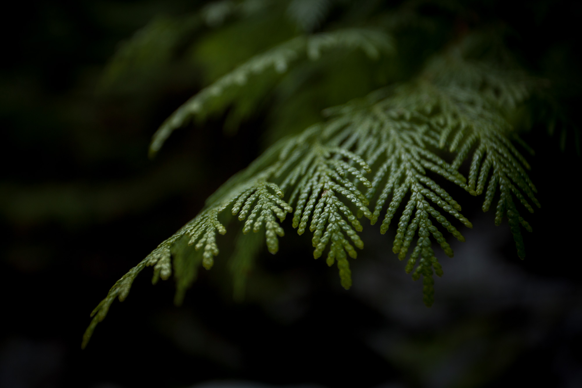 naturalworld23_1503.jpg